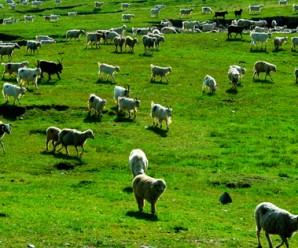 marmara bölgesi hayvancılık