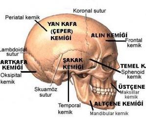 yassı kemik nedir
